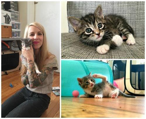 Hannah-Shaw-Kitten-Lady