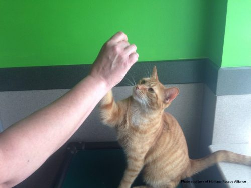 cat-high-five