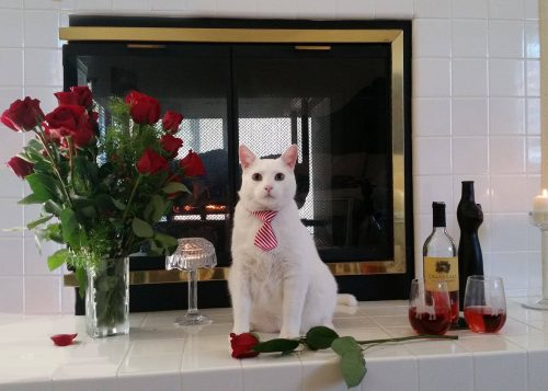 white-cat-fireplace-roses