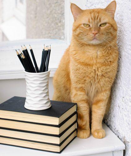 cat-journals