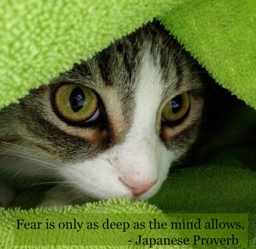 cat-burrowing-blanket