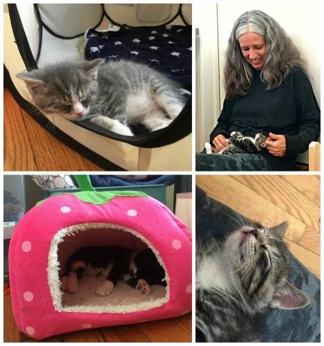 sleeping-kittens