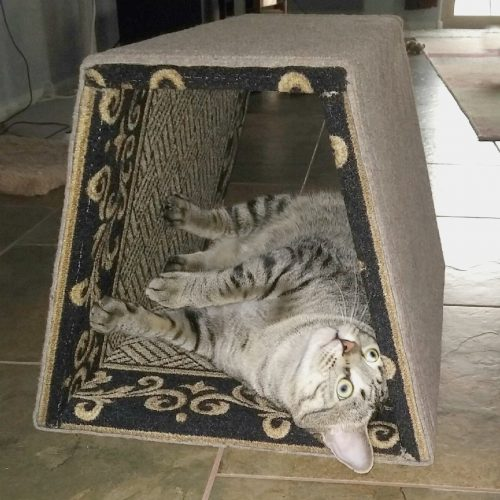 wood-cat-tunnel