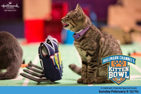 kitten-bowl-2017