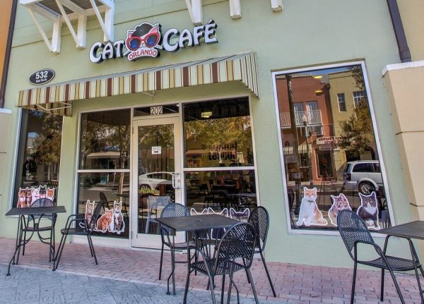 Orlando-cat-cafe