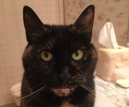 tortoiseshell-cat-face