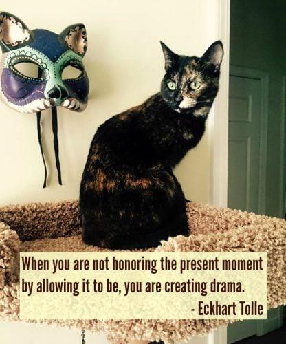tortoisehshell-cat-drama