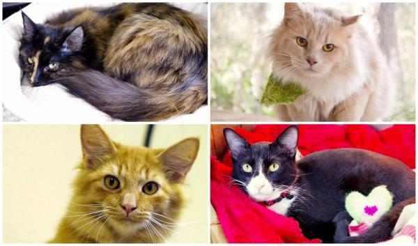 orlando-cat-cafe-cats