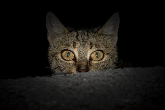 cat-dark