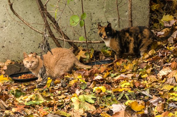 feral-cat-colony