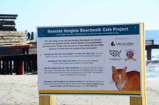 feral-beach-cats