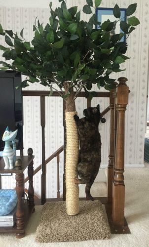 scratching-tree-post