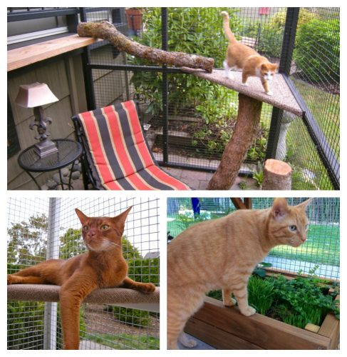 catio-outdoor-enclosure
