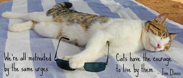 cat-on-lounge-chair-beach