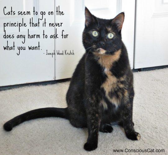 cat-begging