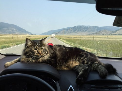 Otie-adventure-cat-montana