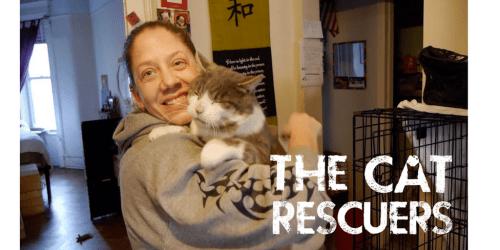 the-cat-rescuers