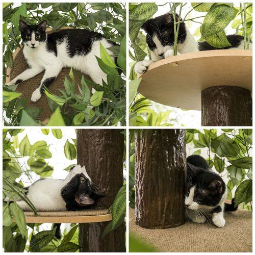 cat-haven-cat-condos