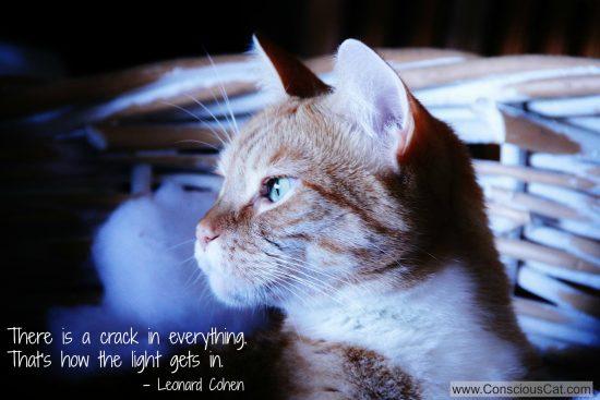 cat-light