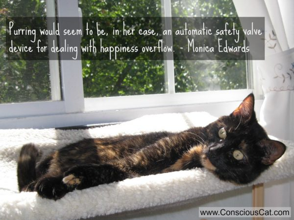 purring-cat-quote