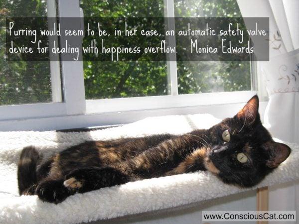 purring-cat-quote