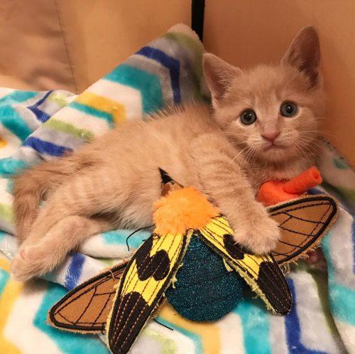 Chloe-Kitten-Lady