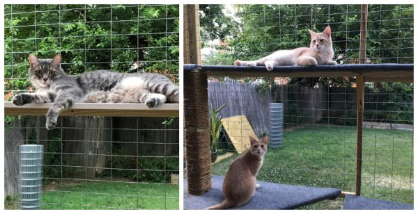 outdoor-enclosure-cats