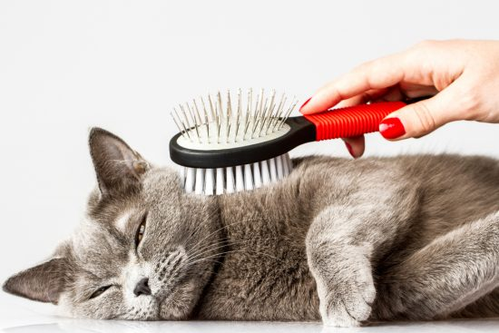 cat-brush-shedding