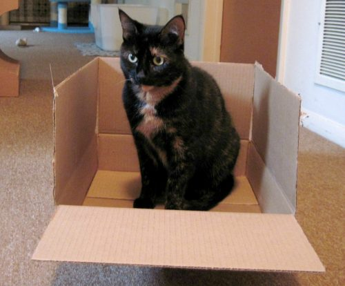 why-do-cats-love-boxes