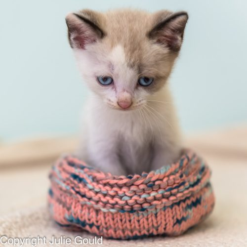 kitten-bed