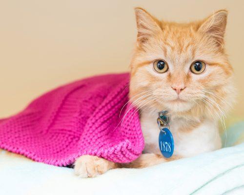 cat-blanket
