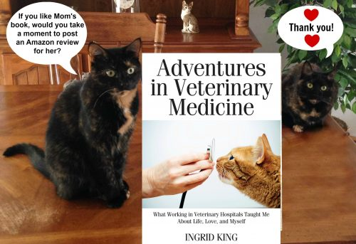 adventures -in-veterinary-medicine