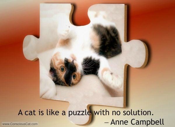 cat-puzzle