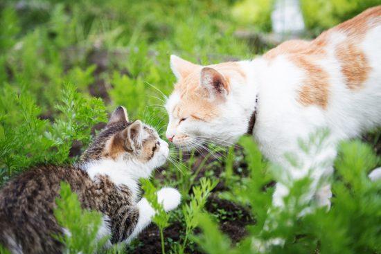 cat-odor