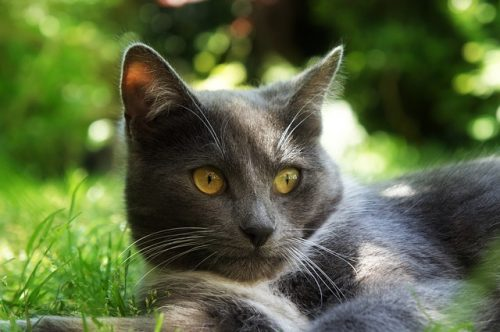 cat-in-grass