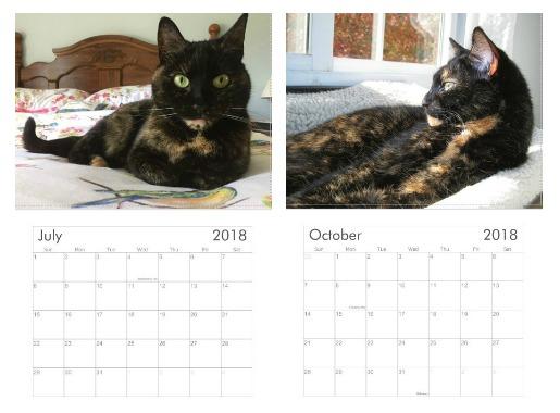 conscious-cat-calendar