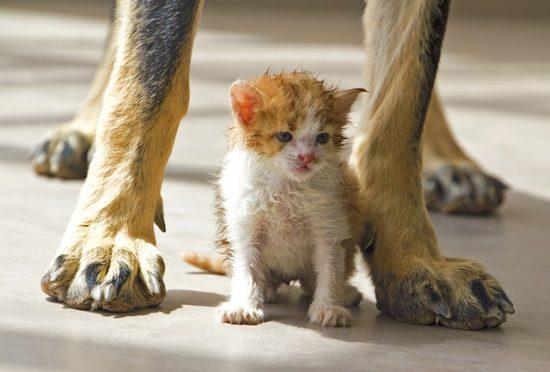 6 week kittens