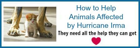 animal-rescue-irma