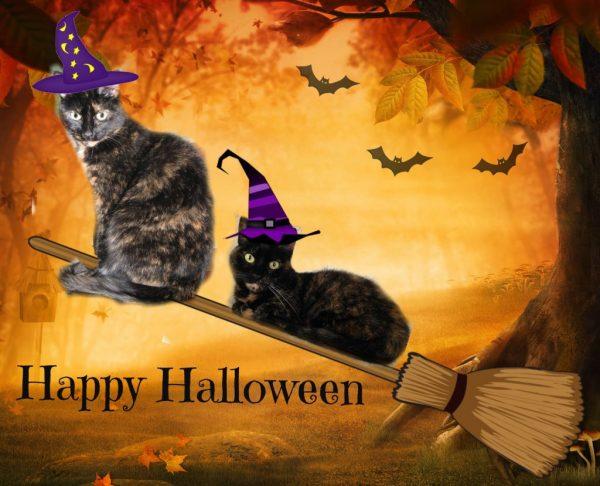 Happy Halloween - The Conscious Cat