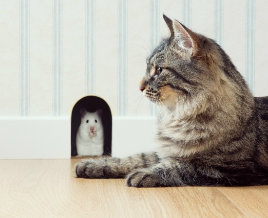 mouse-cat