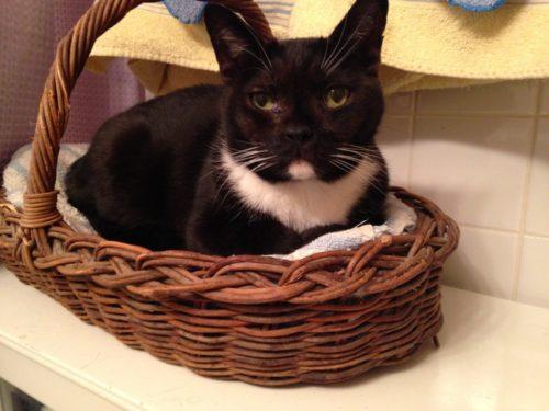 cat-basket