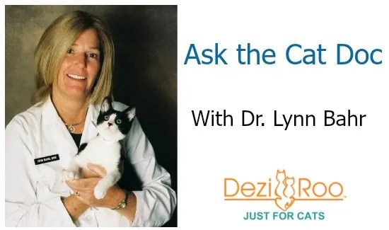 Ask-the-Cat-Doc-with-Dr.-Lynn-Bahr