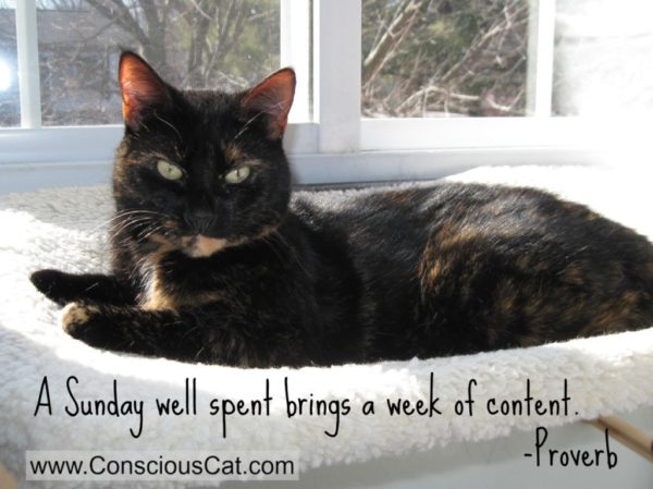 Sunday Quotes A Sunday Well Spent The Conscious Cat