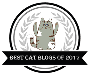best-cat-blog