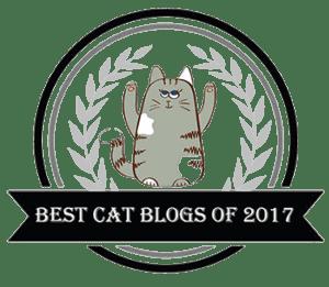 best-cat-blog
