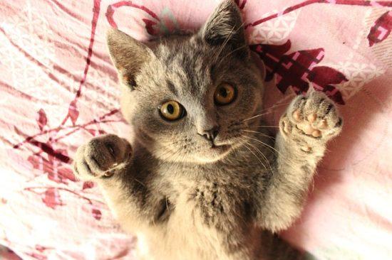 cat-left-right-paw
