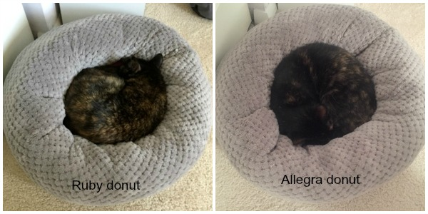 donut-cat-bed