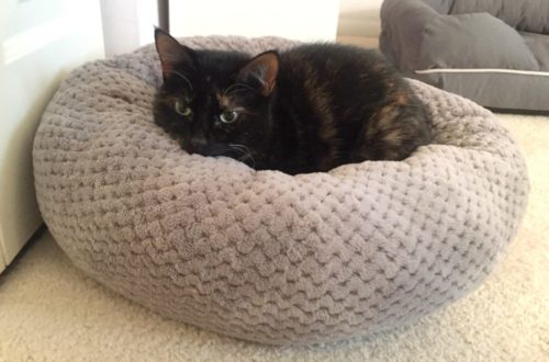 donut-cat-bed