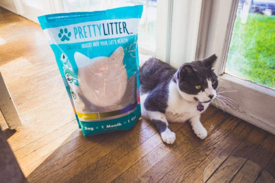 pretty-litter-cat