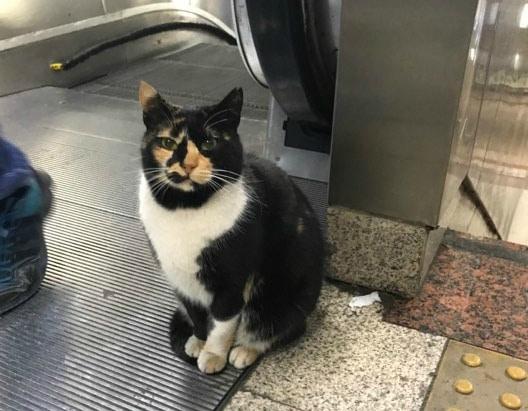 taksim-kedi-metro-station-cat
